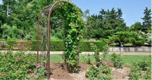 Best arbour arch reviews