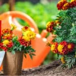 How to grow summer bedding from seed