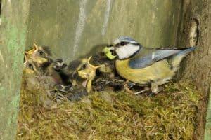 Inside bird box filmed with bird box camera