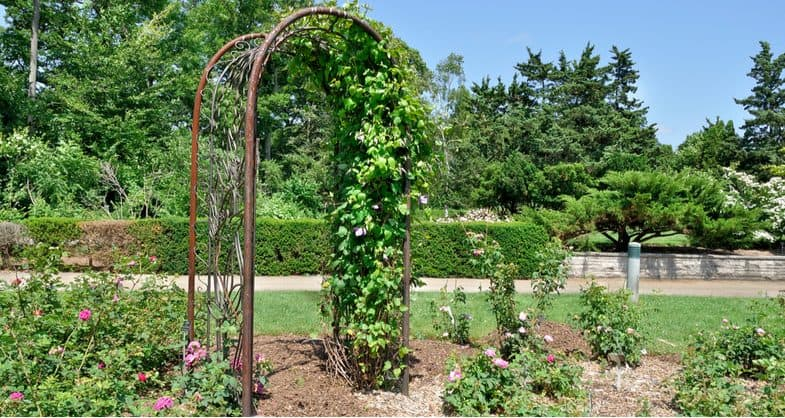 Best garden arches – wood vs metal vs plastic and our top 6 picks