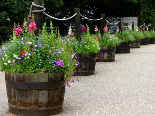 whisky barrels planted up