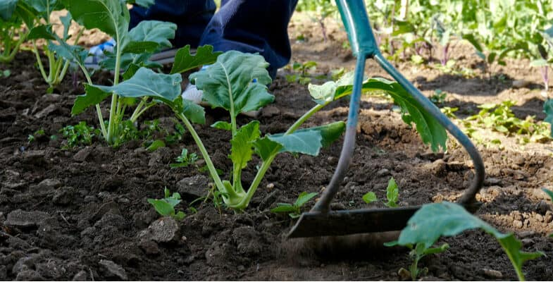 Top 6 Best Garden Hoes for Cultivating Soil and Weeding