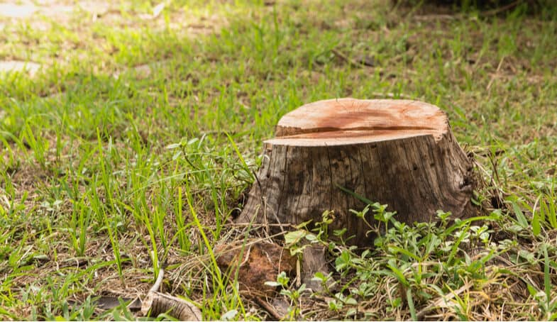 Top 5 Best Tree Stump Killers – Commercial Strength & Domestic Use