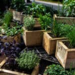 Best herb planters and comparison