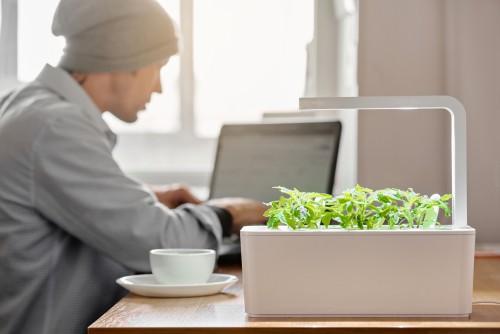 Indoor smart garden in office used for growing fresh veg and herbs