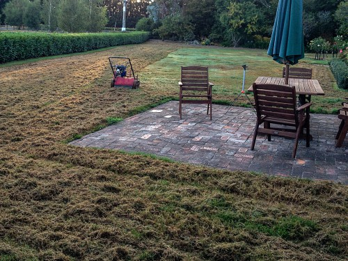Lawn used scarified in autumn