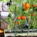 Top 5 best tomato planters compared and reviewed