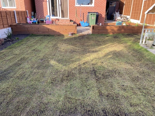 My lawn that has just been scarified with the Bosch 1100 AVR Verticutter
