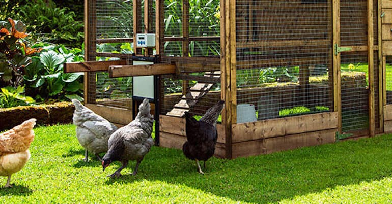 In this guide, we look at some of the best automatic chicken coop door openers and compare the specs from what weight they can lift which is important and more