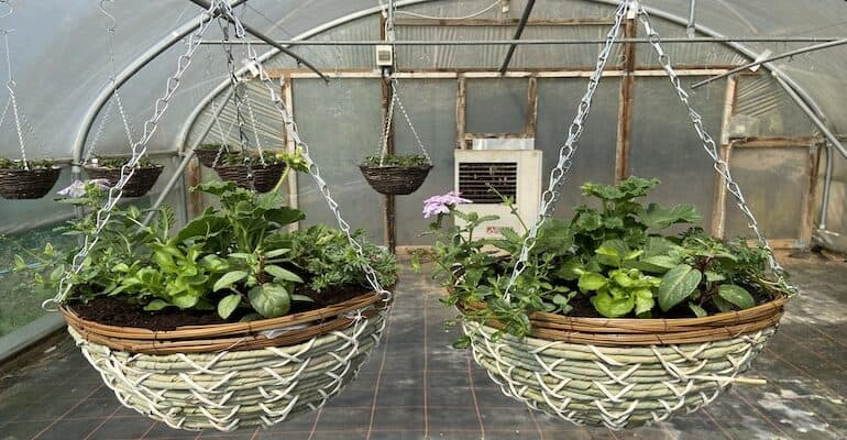 How to plant a summer hanging basket step by step