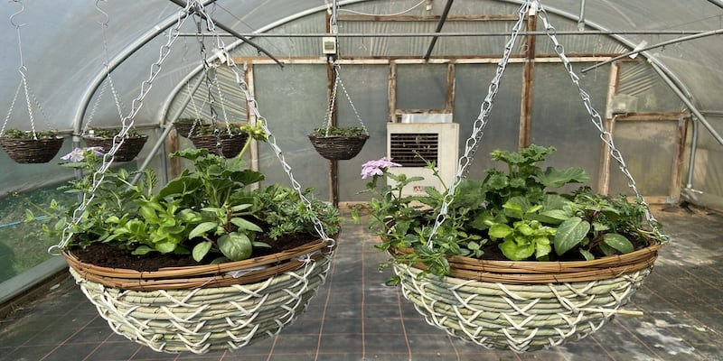 How to plant a summer hanging basket – step by step