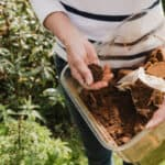 Should you use Coffee Grounds for Hydrangeas and why you might do this in the first place