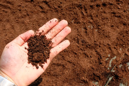 Using coffee grounds can help retain moisture in the soil