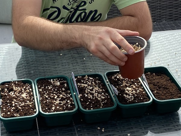 covering seeds with vermiculite to help retain moisture and improve drainage