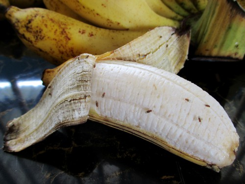 fruit flies attracted to fruit left on the side