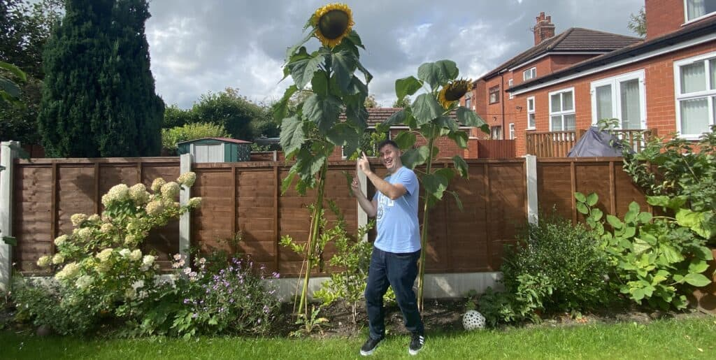 How to grow sunflowers – It's really easy