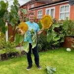 I show you when and how I harvest sunflower seeds which you can use for feeding the birds, planting in spring and even roasting to eat.