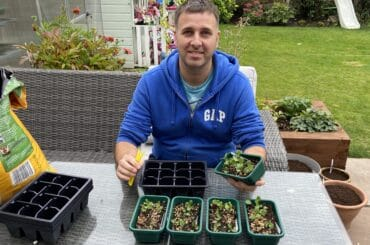 I show you how to prick out seedlings from choosing the right pots or plug trays, how to handle seedlings to putting them in a greenhouse or sunny windowsill.